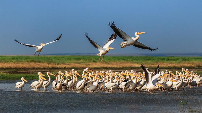 Bird colony in the Danube Delta